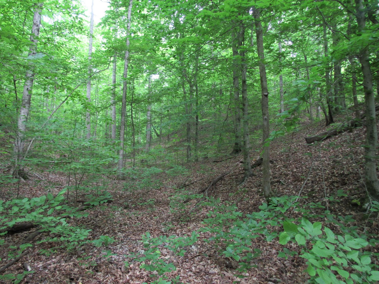 3.2 Buildable Wooded Acres Near TN River
