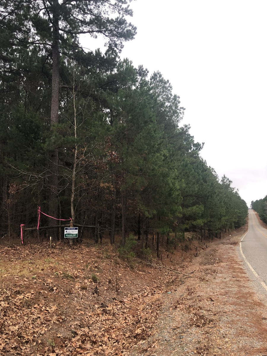 Recreational Pine Timber Land for Sale in Nevada County, AR