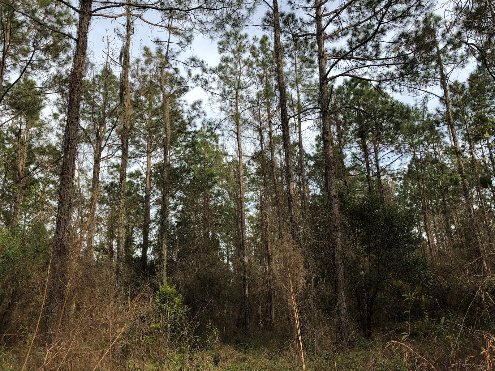 Timber, Land, Vacant, Industrial Property For Sale North FL