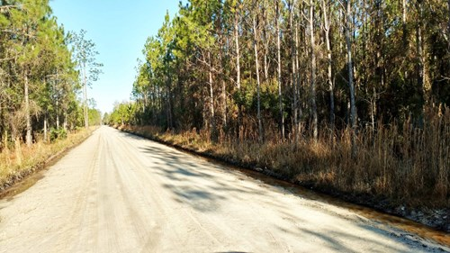 553 BEAUTIFUL ACRES FOR SALE IN LAKE CITY, FLORIDA