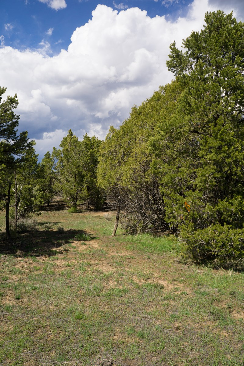 Perfect place for the Colorado dream home, Owner May Carry