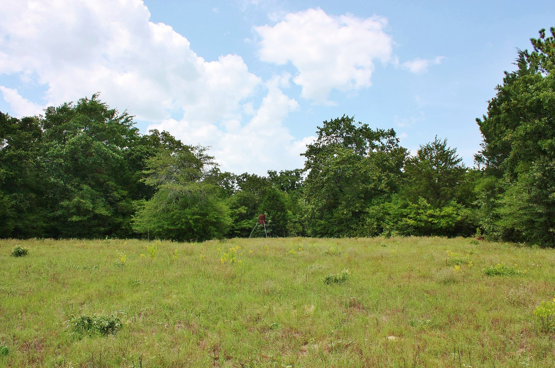 Hunting/Recreational Land For Sale in Leon County, Texas