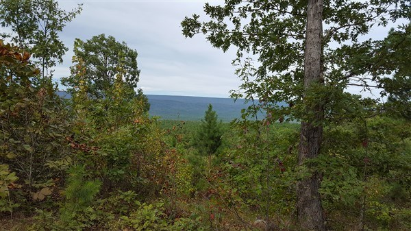 160 Acres on Kiamichi Mountain Surrounded By National Forest