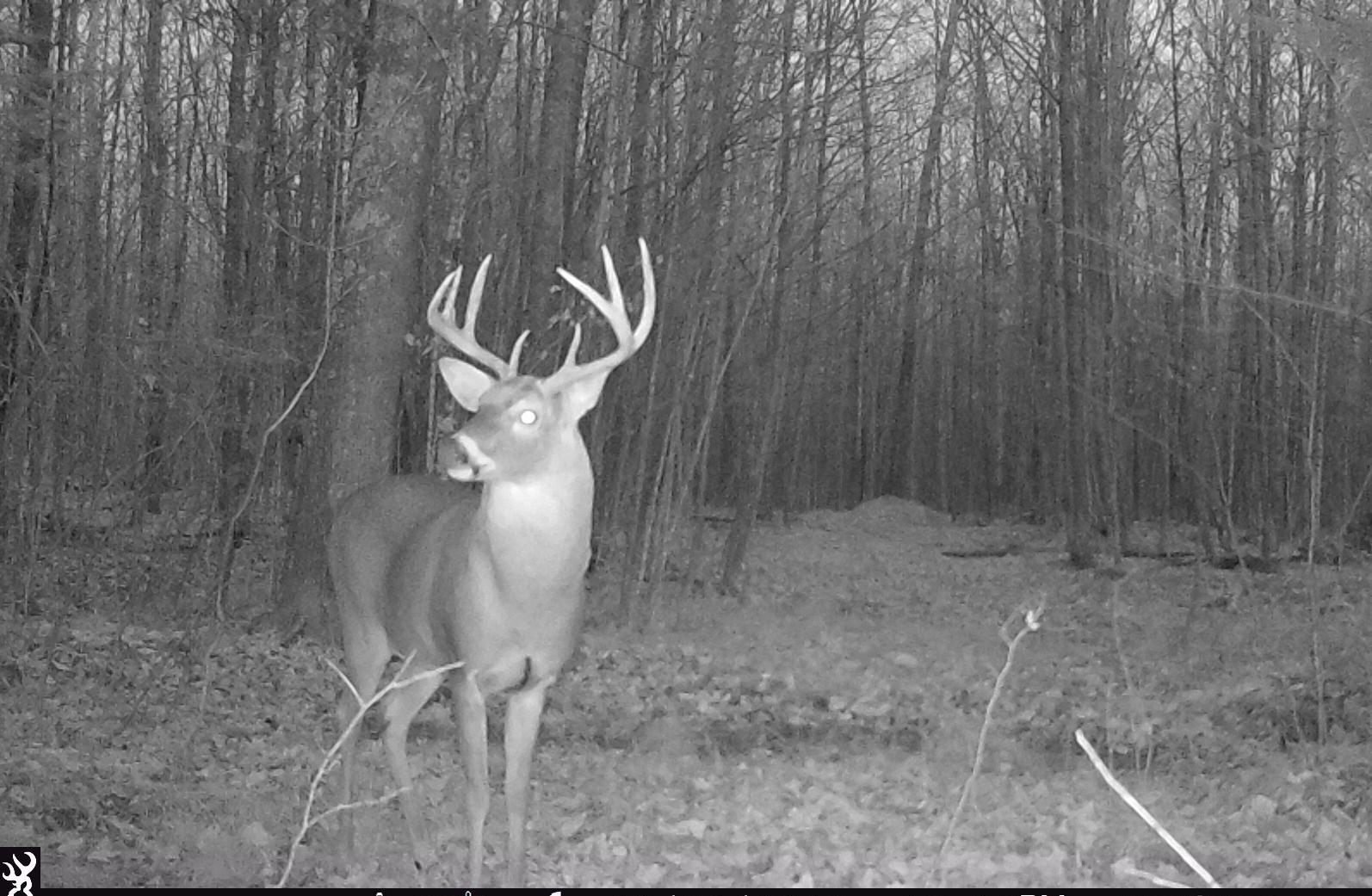 Quality Gated Hunting Property Marathon County WI