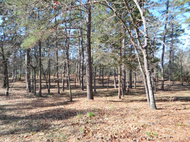 RESIDENTIAL LAND FOR SALE IN HOLLY LAKE RANCH TEXAS