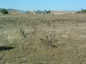 COMMERCIAL LAND FOR SALE IN EDGEWOOD NM