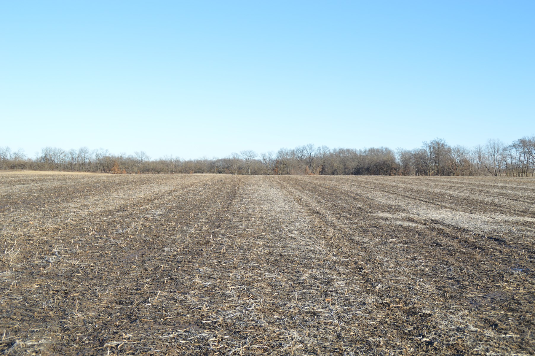 INVESTMENT GRADE TILLABLE FARM WITH HUNTING -- 78 +/- ACRES