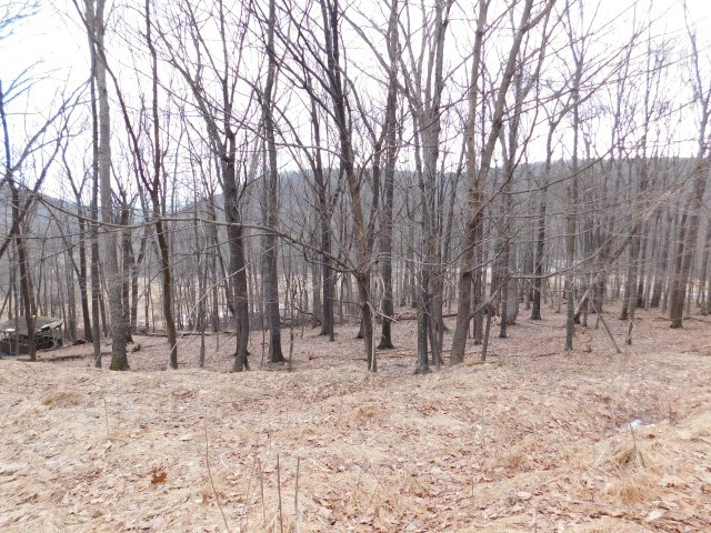 Land For Sale - New Creek, WV