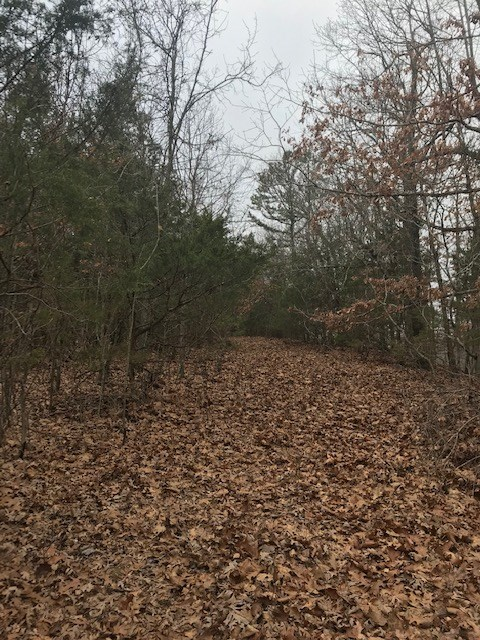 Wooded Acreage Near Bull Shoals Lake