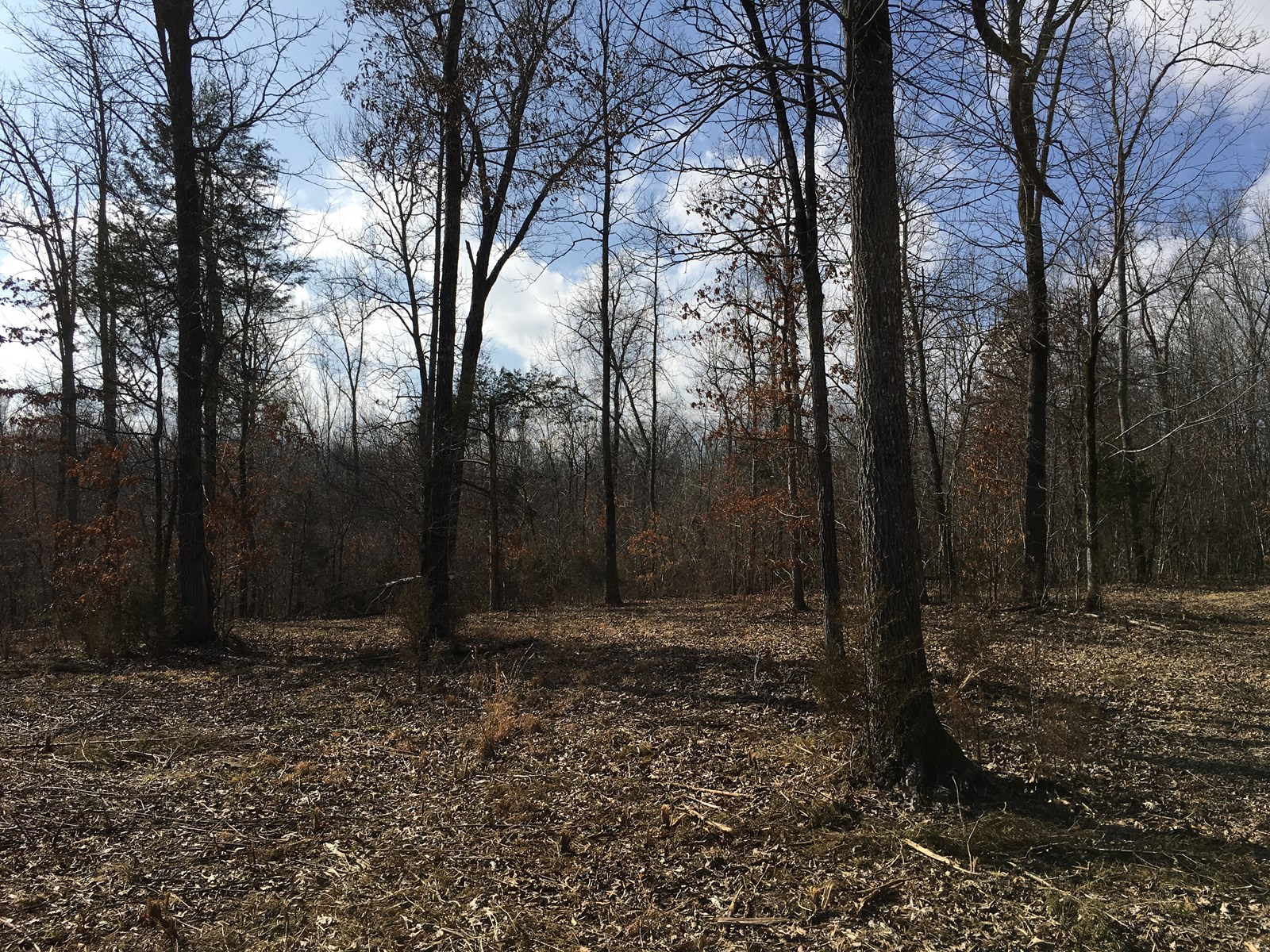 Hunting land for Deer, Turkey woods for sale Pocahontas, AR