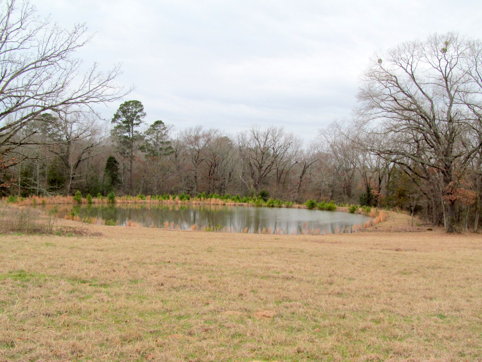 ALMOST 16 EAST TEXAS ACRES FOR SALE IN WINNSBORO, TEXAS
