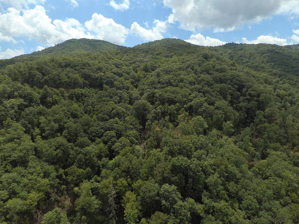 Tilley Creek Tract - 135 Acres with 4400 Ft Creek Front