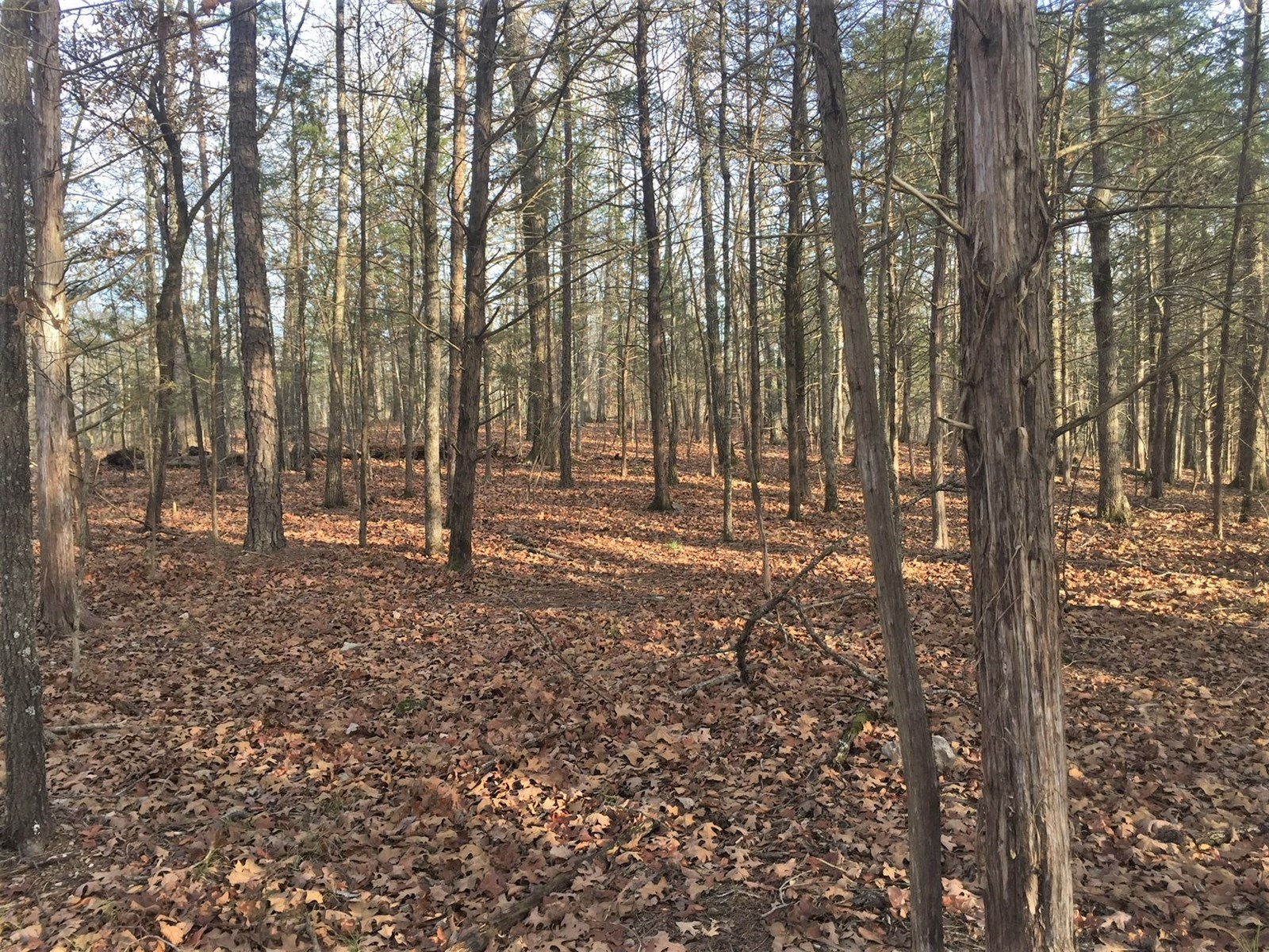 Acreage Inside National Forest & joining Buffalo River Park