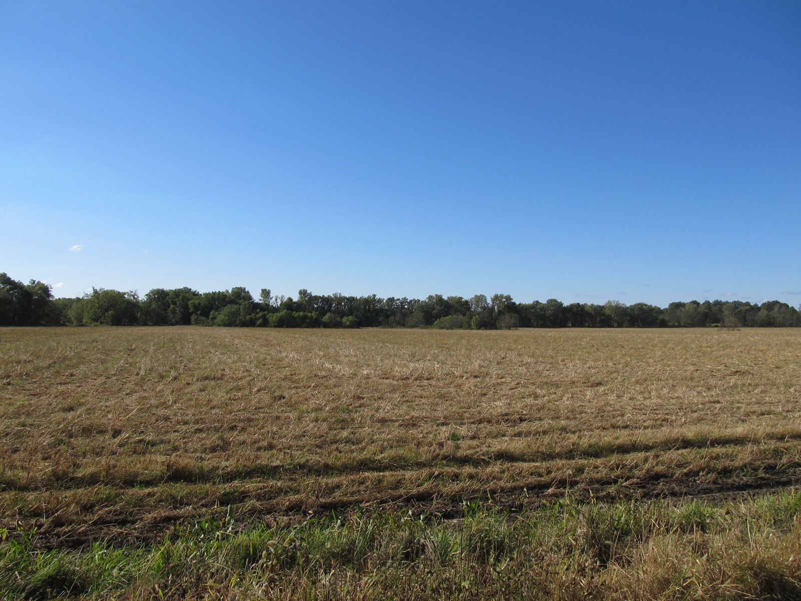 PRODUCTIVE TILLABLE CREEK BOTTOM FARM --102.5 +/- ACRES
