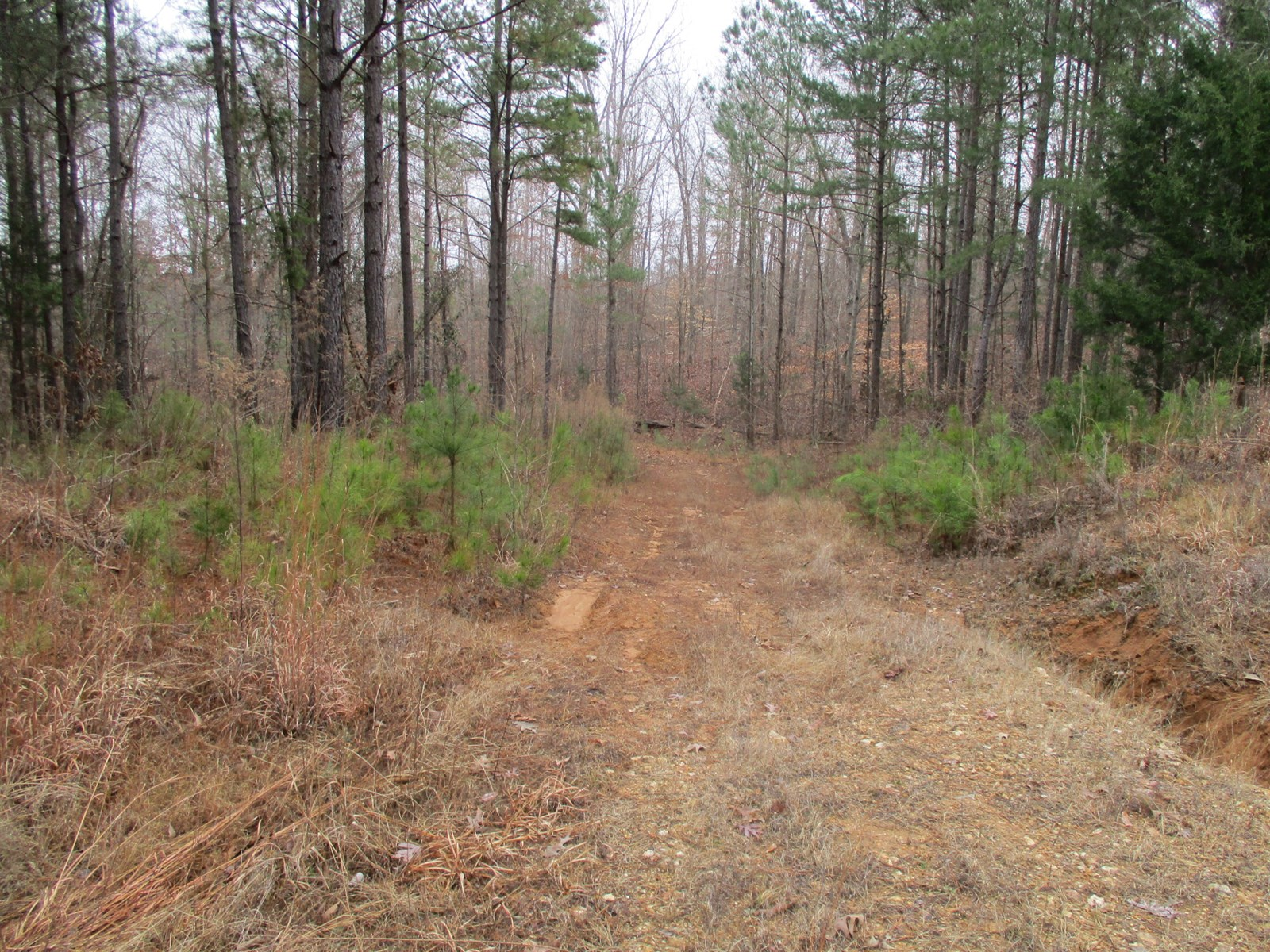 Acreage (117.76) For Sale, Chester County, Enville, TN