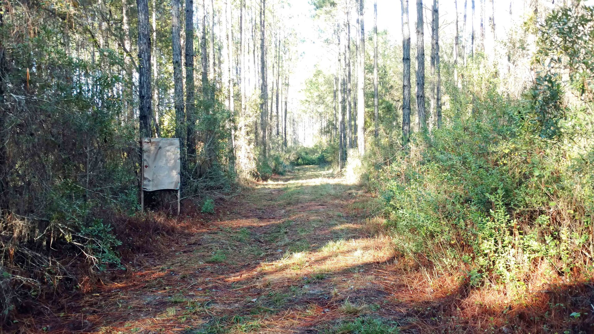 120 ACRES FOR SALE IN THE OSCEOLA NATIONAL FOREST