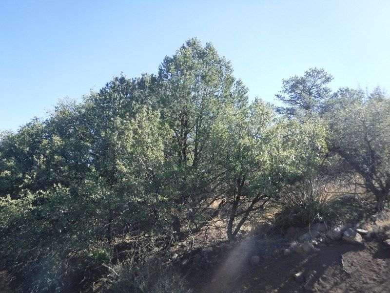LAND FOR SALE .81 AC SILVER CITY NM SINGLE FAMILY LOT