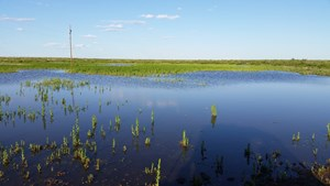 WORKING RANCH FOR SALE IN SOUTHEASTERN NM NEAR BRANTLEY LAKE
