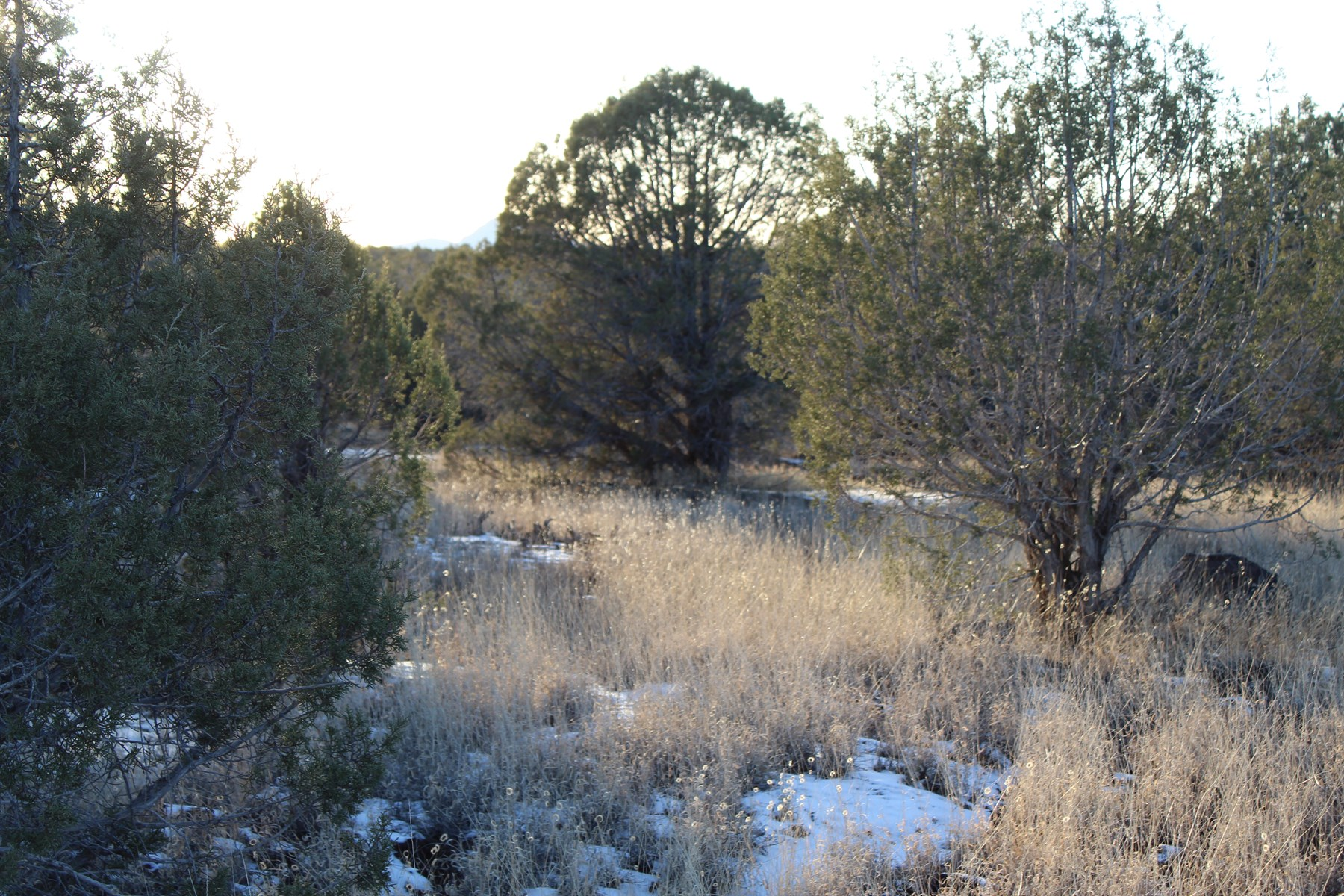 Mountain Land for sale in Ashfork AZ
