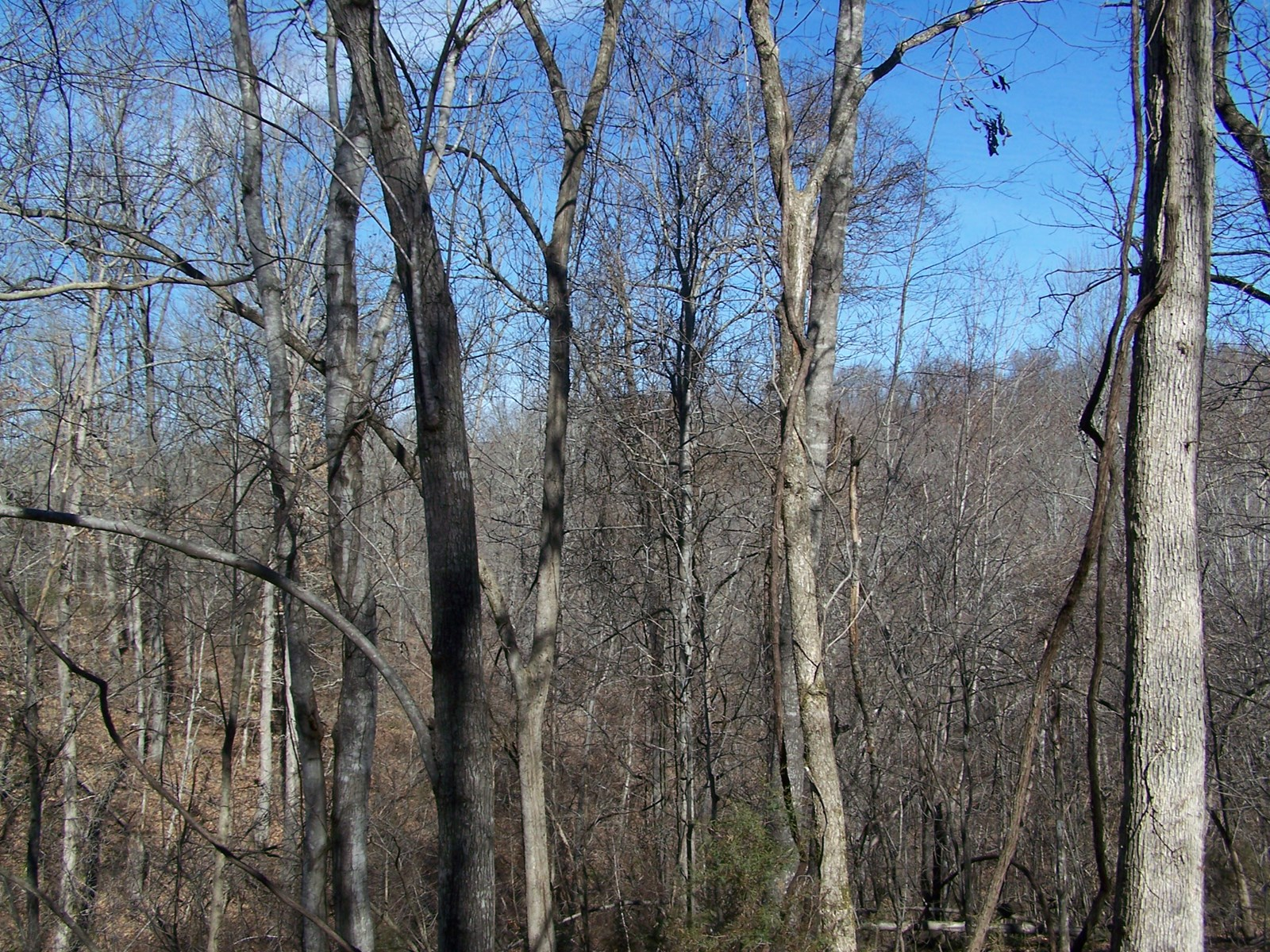 40 Acres Hunting and Recreational Land in Ozarks of Arkansas
