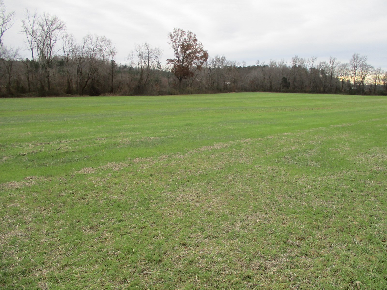 Great Hunting & Cropland; 184 Acres in West Tennessee