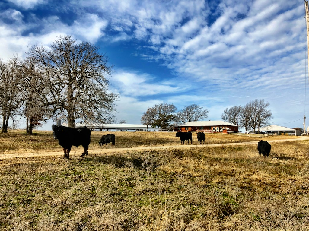 TURN KEY RANCH OPERATION FOR SALE -OVER 1300 ACRES +20 PONDS
