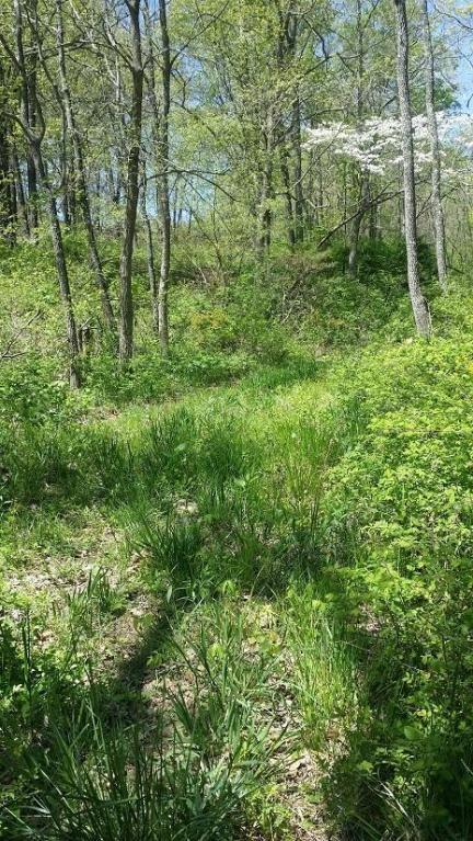 Small acreage near town for sale. Ava, Mo