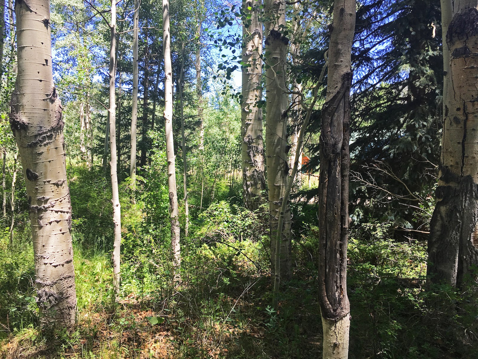 Colorado Mountain Fly Fishing and Recreation Land For Sale