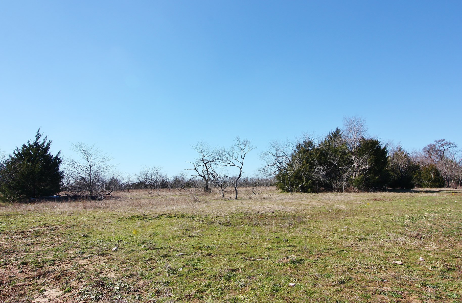 Land for Sale in Thornton, TX - Limestone County
