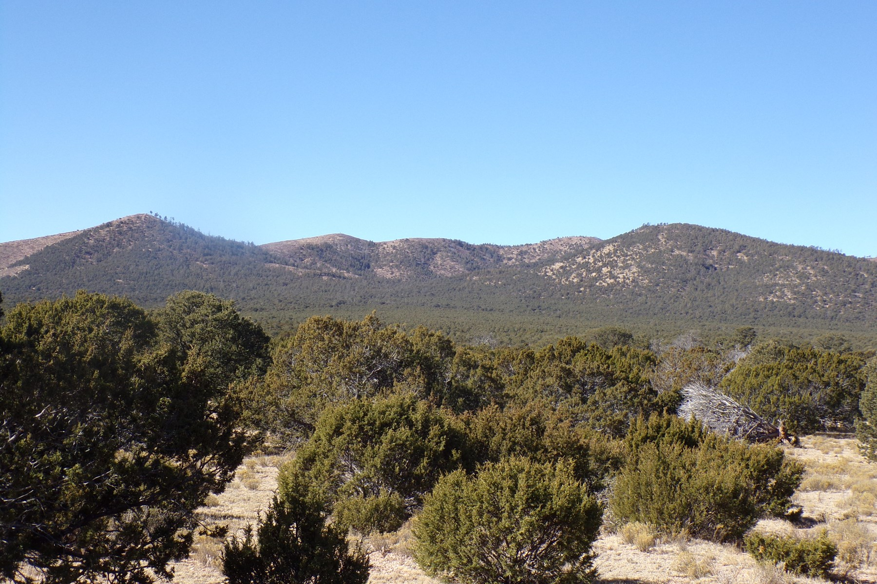 Forested Mountain Acreage For Sale in Lincoln County NM