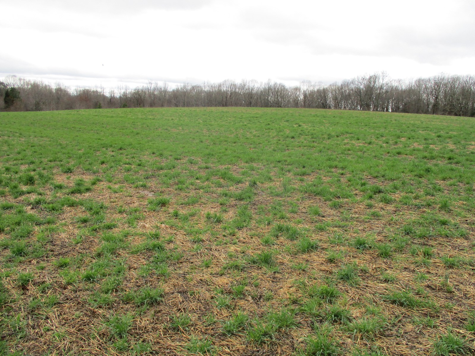 McNairy County Crop & Hunting Land for Sale 108 Acres