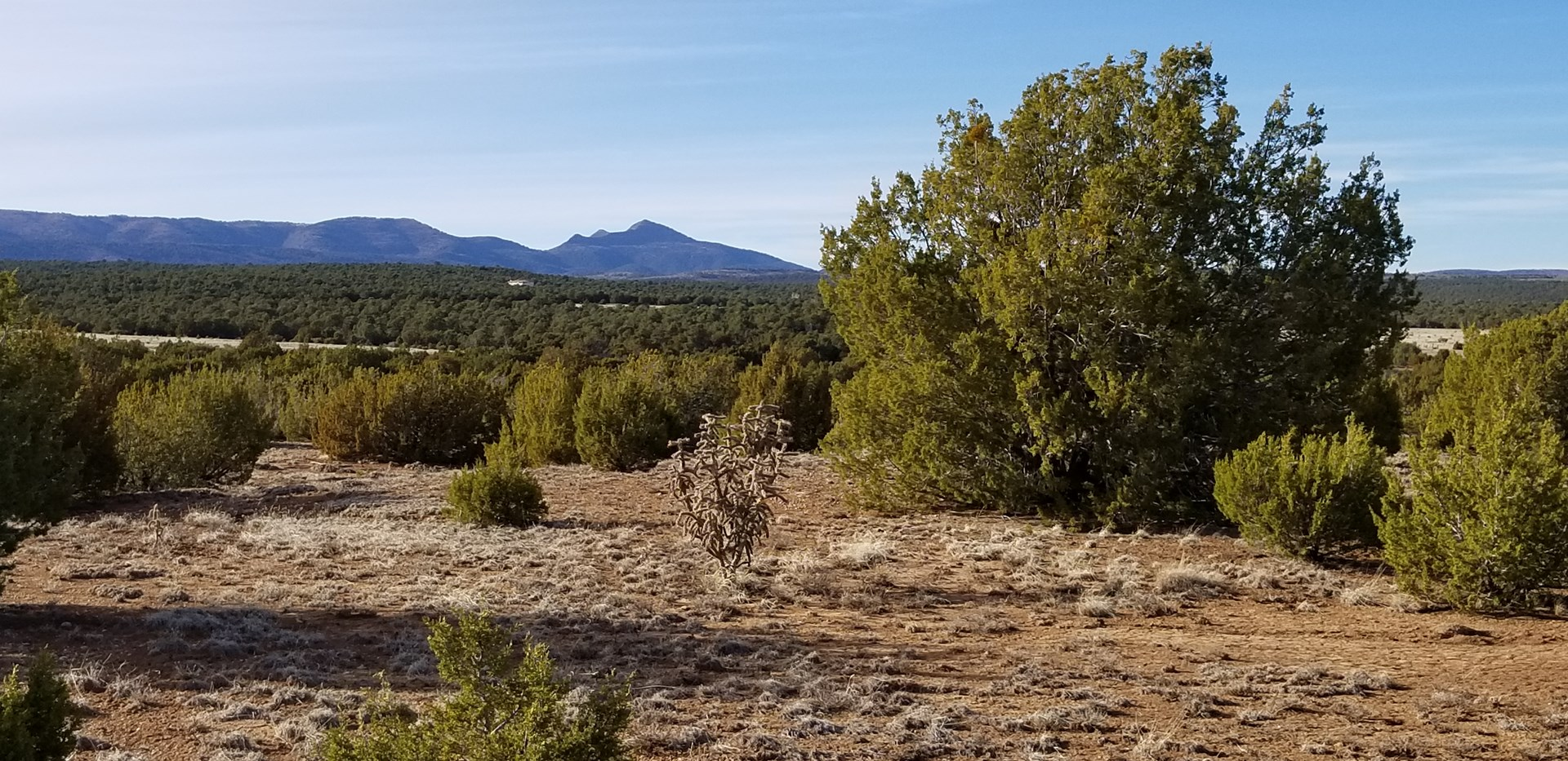Beautiful 50 Ac Hwy 55 Frontage For Sale near Torreon NM