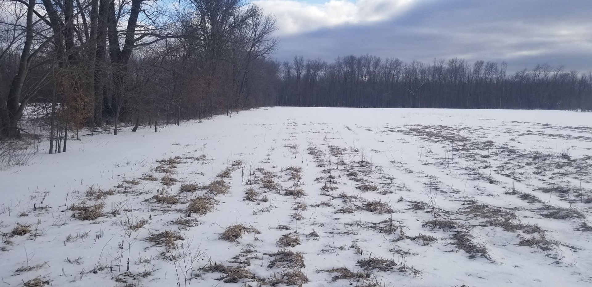 MO LAND FOR SALE, RECREATIONAL HUNTING LAND, ROW CROP
