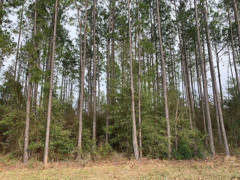 LEVY COUNTY LAND FOR SALE - Trenton, Florida