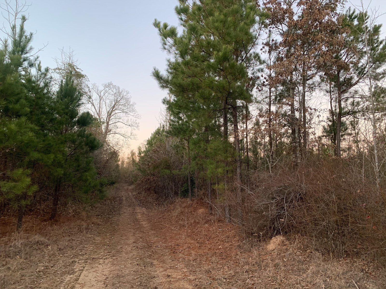 Young Timberland /Hunting Land for Sale Ouachita County, AR