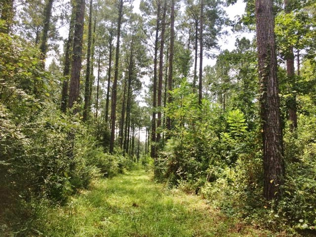 Off the Grid 40 Acres Borders National Forest in South MS