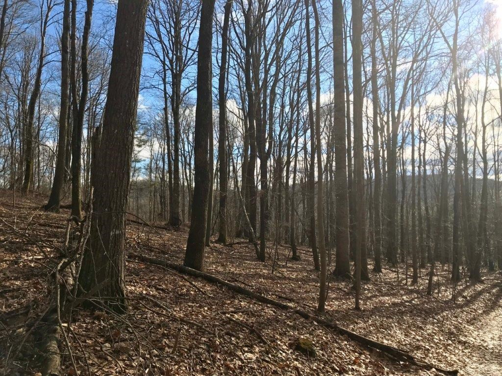 Wooded Land Close to Blue Ridge Parkway for Sale in VA