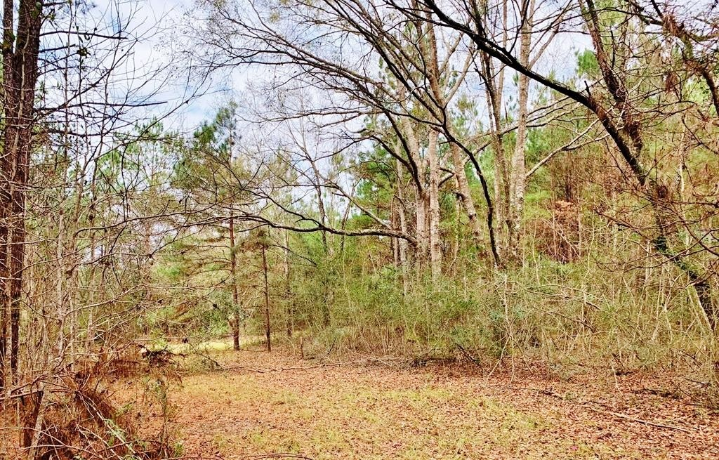 116.91 Acres Hunting/Timber Land for Sale Southwest MS