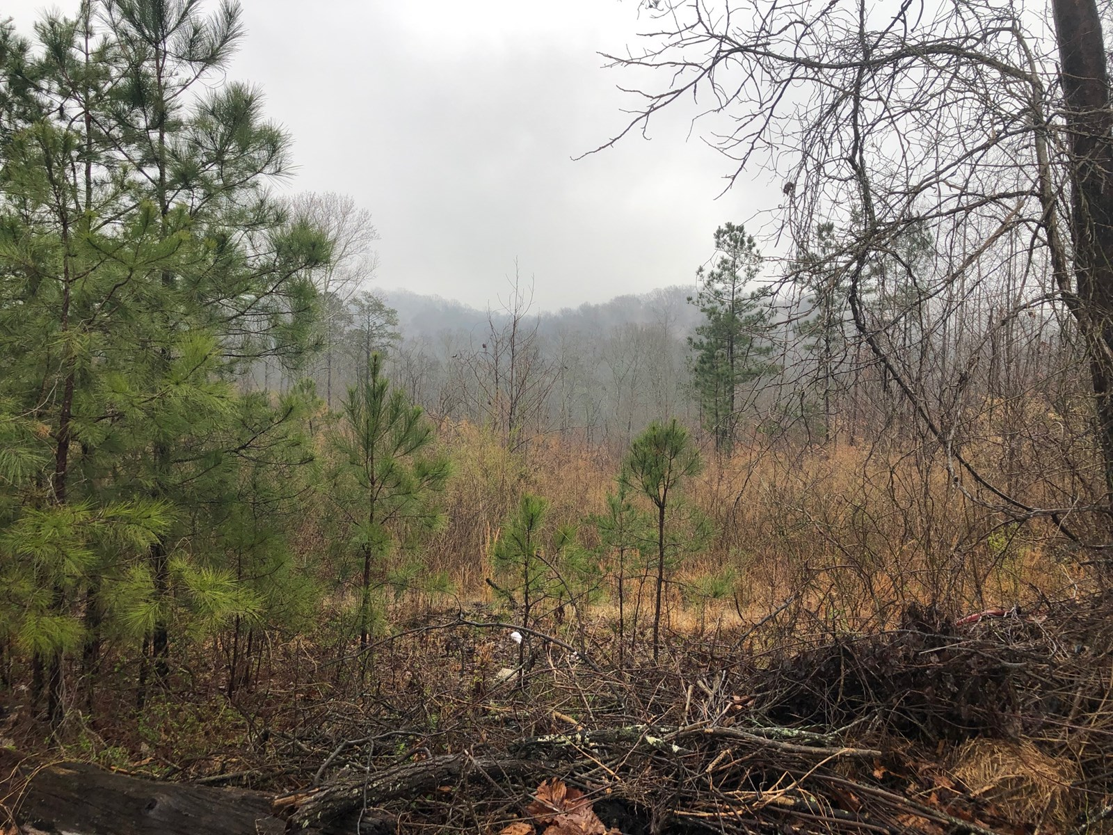 Large tract of land in North Ga.