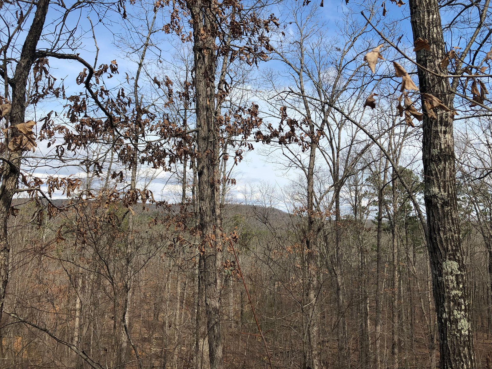 10 Wooded Acres Near Clinton Arkansas in Van Buren County