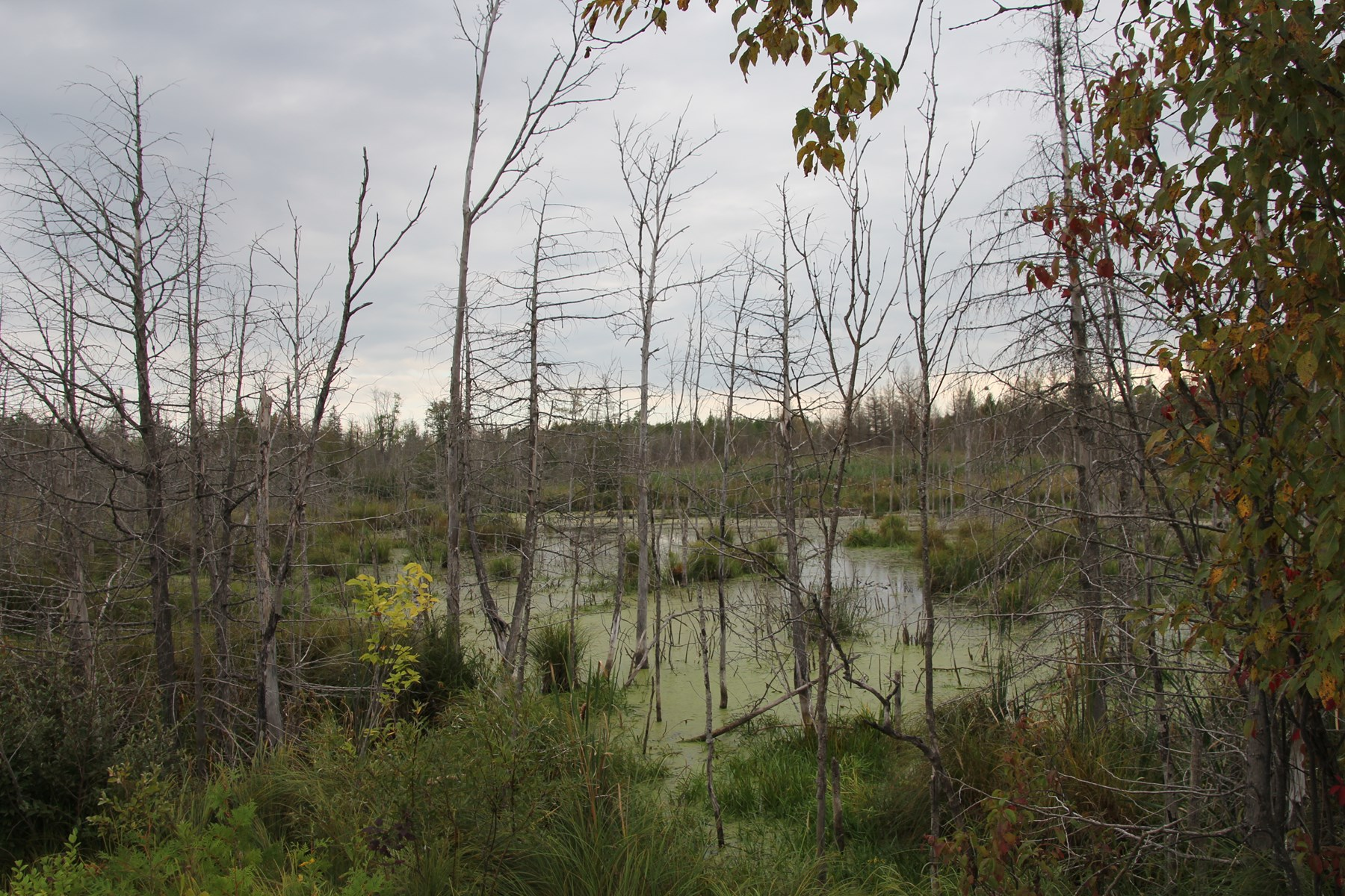 Hunting Land For Sale Northern Michigan Duck Hunting Pond