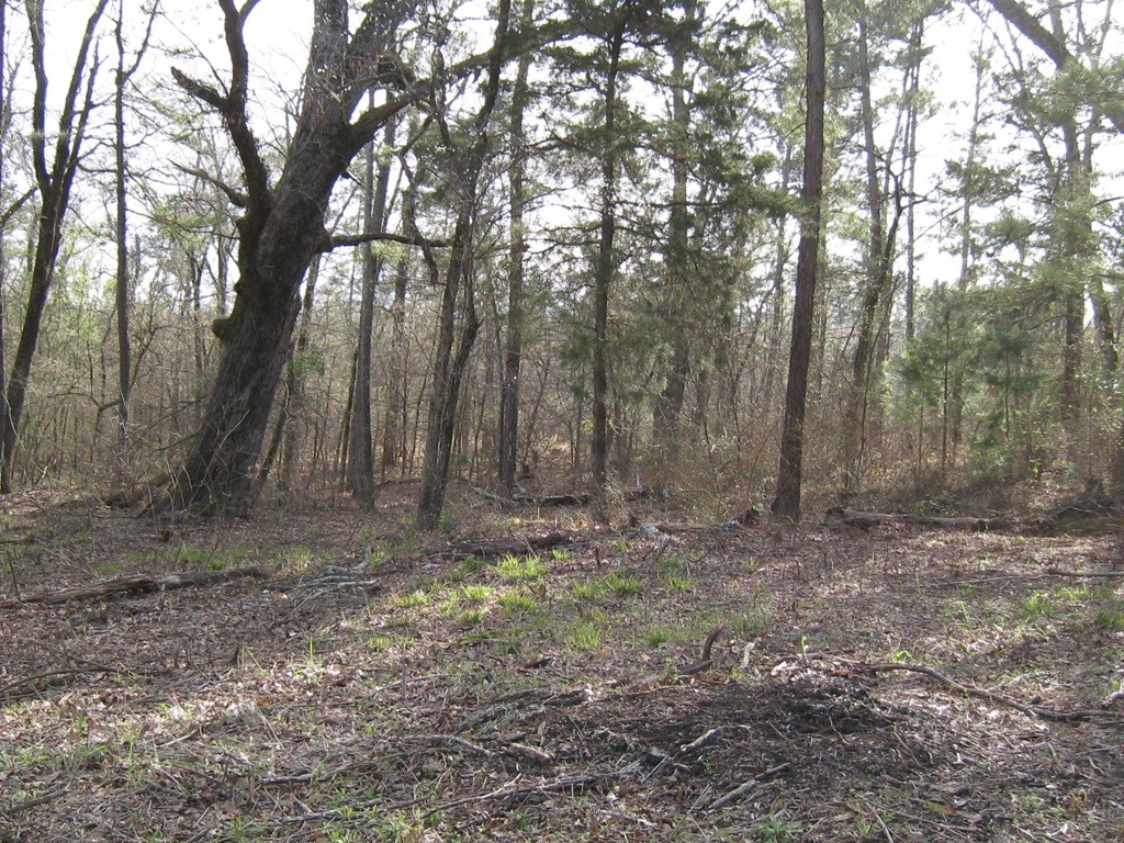 EAST TX LAND FOR SALE | ACREAGE IN FRANKSTON TX