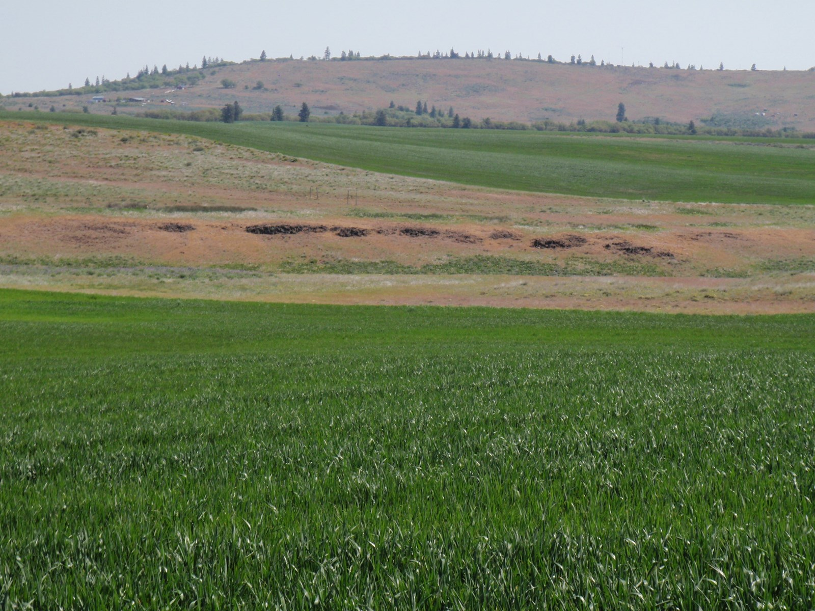 Land for sale in Goldendale Washington, near Dalles Orgeon