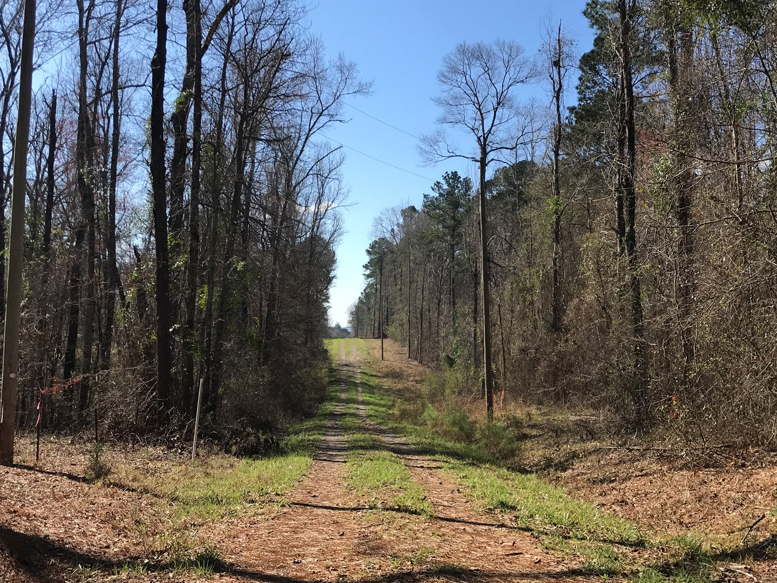 Land for Sale - Craig Springs Rd, Sturgis, MS 39769