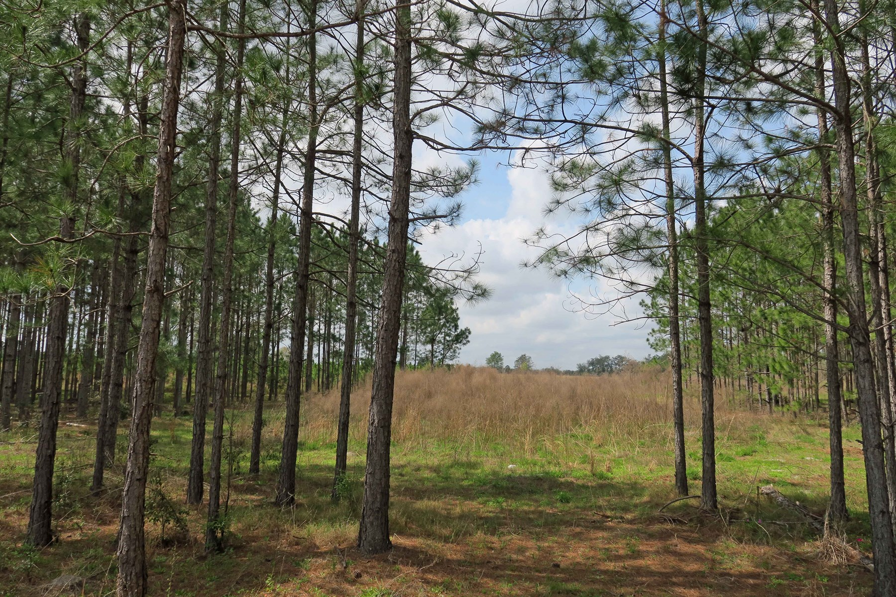 18.31 ACRES FOR SALE IN LIVE OAK!