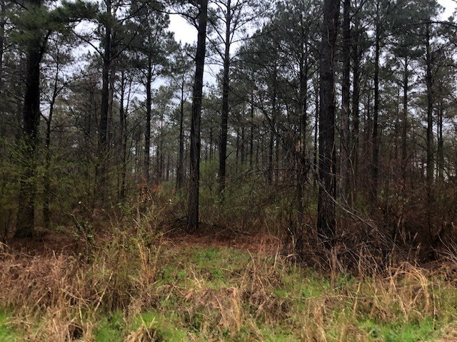 Timberland property on State HWY 159 South, Chicot County AR