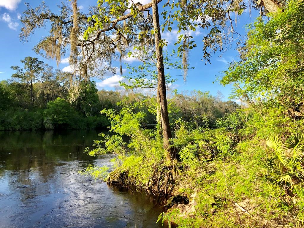 SUWANNEE RIVER WATERFRONT PROPERTY - 68 Acres - Mayo, FL