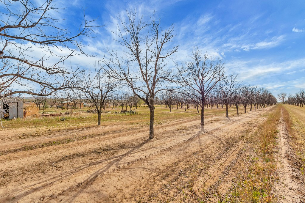 Pecan Farm For Sale Rio Grande Valley Southern New Mexico