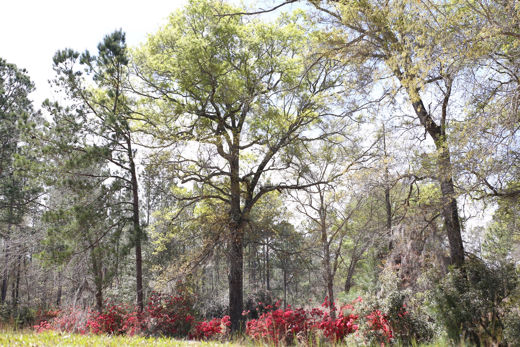 23+/- Acre Homesite in Pembroke, Bryan County, GA