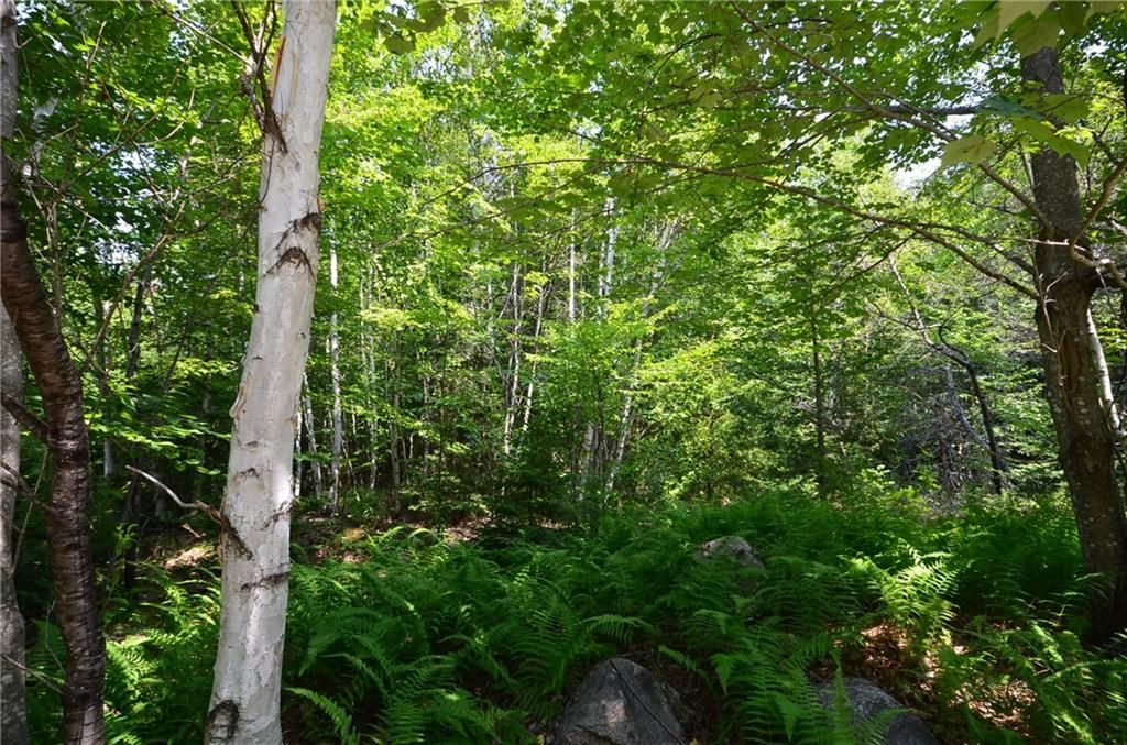 Home lot for sale in Howland, Maine